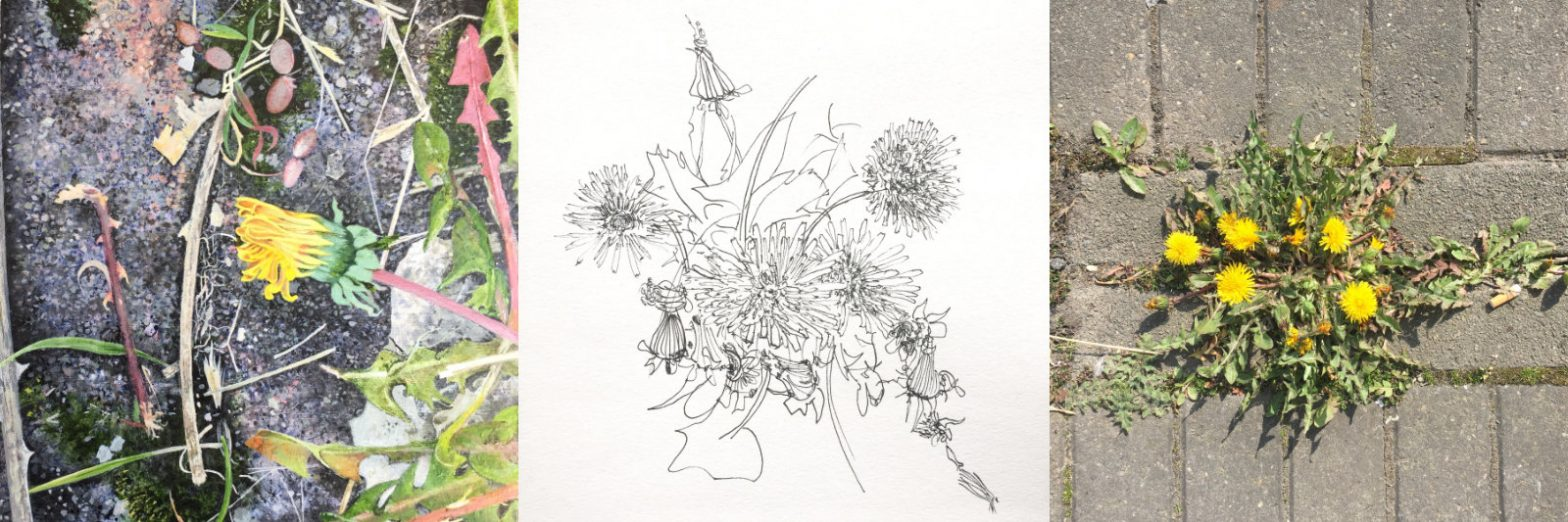 A painting, a sketch and a photo of Dandelions