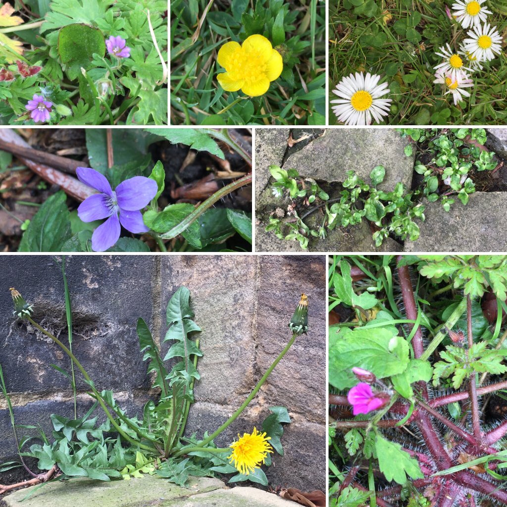 Collage of photos of wildflowers